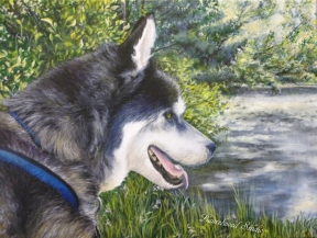 Siberian Husky - Dog Pet Portrait in Acrylic
