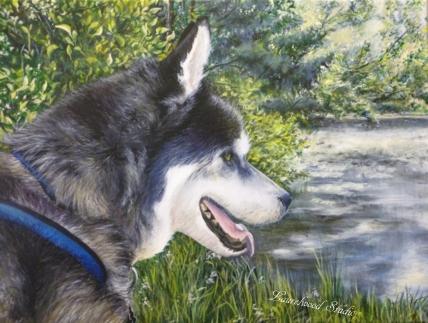 Siberian Husky - Dog Pet Portrait in Acrylic