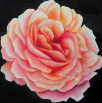 Pink Rose - Watermarked