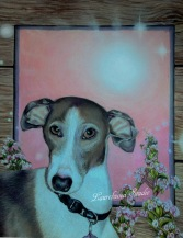 Italian Greyhound - Dog Pet Portrait in Colored Pencil
