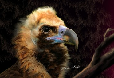 Portrait of a Vulture - Digital Wildlife Painting