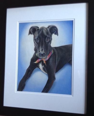 Dog Pet Portrait in Colored Pencil