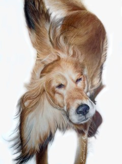 Spaniel Mix - Dog Pet Portrait in Colored Pencil on Gessobord