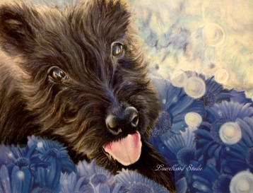 Scottish Terrier - Dog Pet Portrait in Colored Pencil