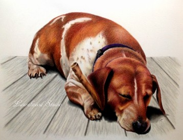 Hound - Dog Pet Portrait in Colored Pencil