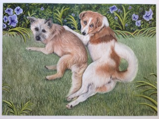 Thai Mutts - Dog Pet Portrait in Colored Pencil and Acrylic on Gessobord